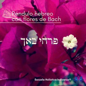 TPHKFB Taller de Péndulo Hebreo con Flores de Bach